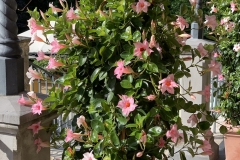 LaVilla-Blumen